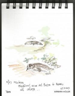 faro, barbara muller outline dibujos urban sketch nopuedodejardedibujar faro patagonia landscape peninsula valdez faro de las orcas pelicula gerardo olivares Roberto bubas pingüinos